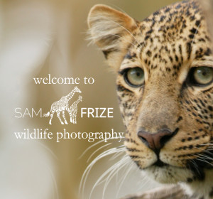 <span>Sam Frize Wildlife Photography</span><i>→</i>
